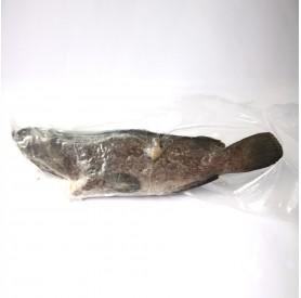 國產石斑魚500g↑/尾